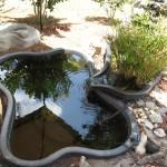 1st Pond